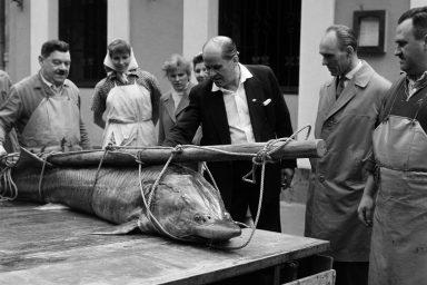 Mi lett a Komáromban kifogott halak sorsa? És miért pont a viza?