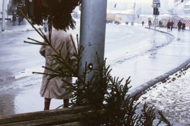 Miért ne állítsd fel a karácsonyfát december 24. előtt?