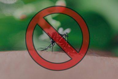 Zajlik a szúnyoggyérítés Komáromban